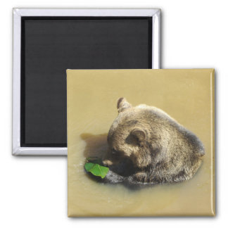 Grizzly Bear Playing with a Leaf Square Magnet
