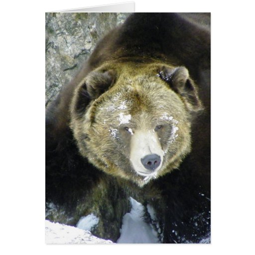 Grizzly Bear Portrait In Snow Greeting Card