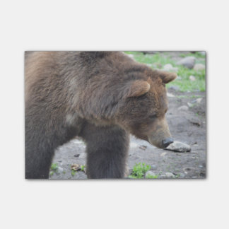 Grizzly Bear Post-it® Notes