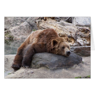 Grizzly Bear Resting On Rock