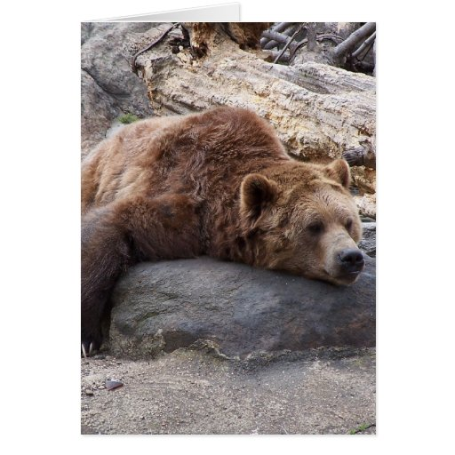 Grizzly Bear Resting On Rock Greeting Card
