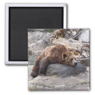 Grizzly Bear Resting On Rock Square Magnet