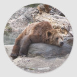 Grizzly Bear Resting On Rock Sticker