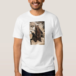 Grizzly Bear Sow Shirts