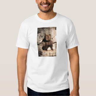 Grizzly Bear Sow Tees