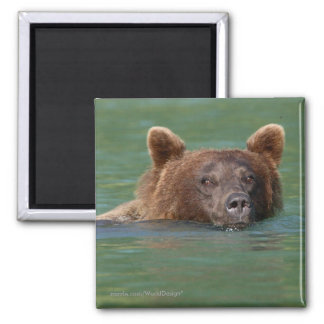 Grizzly Bear Square Magnet