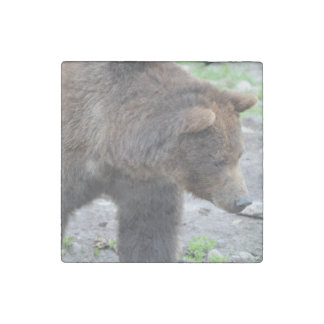 Grizzly Bear Stone Magnet