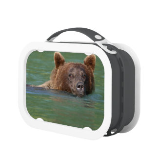 Grizzly Bear Swimming Yubo Lunchboxes