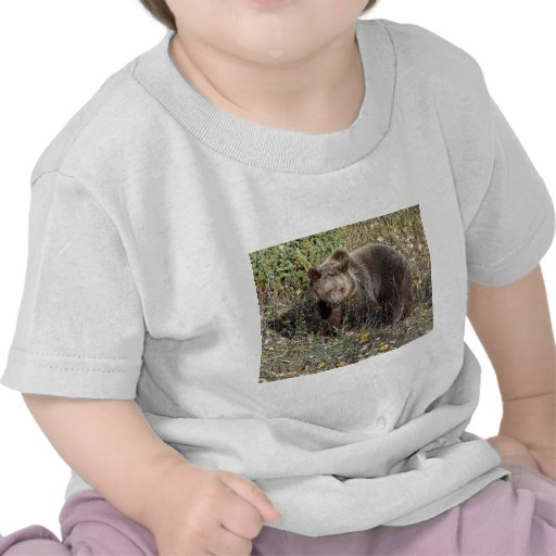 Grizzly Bear Tee Shirt