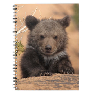 Grizzly bear (Ursus arctos horribilis) Notebooks