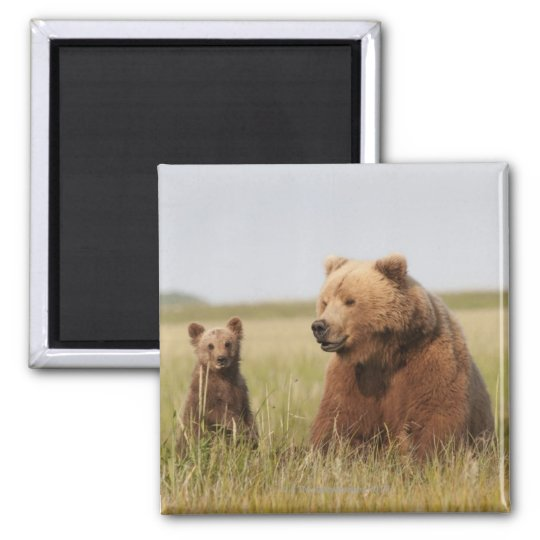 Grizzly Bear with Cub Magnet