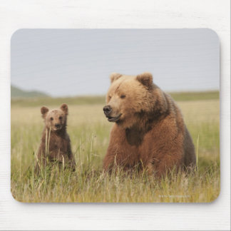 Grizzly Bear with Cub Mouse Mat