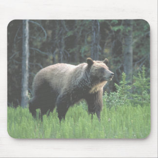 Grizzly Bear Woods Mousepad Mousepad