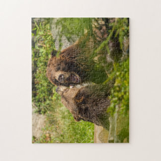 Grizzly Bears Play Fighting Jigsaw Puzzle
