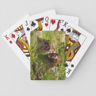 Grizzly Bears Play Fighting Playing Cards