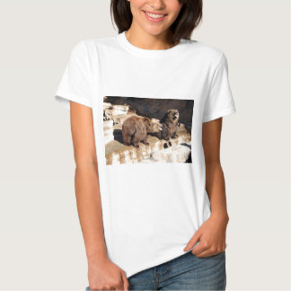 Grizzly Bears Tshirts