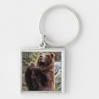 Grizzly Brown Bear Wildlife Photo Key Chains