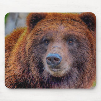 Grizzly Brown Bear Wildlife Photo Mouse Pads