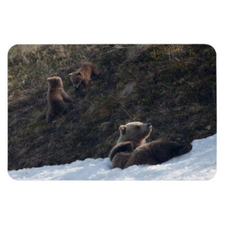 Grizzly Family Scene Rectangular Photo Magnet