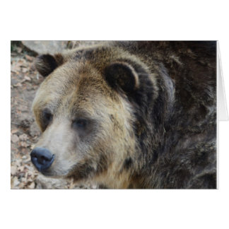 Grizzly III Note Card