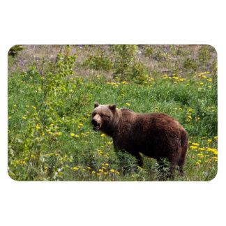 Grizzly in the Dandelions Rectangular Photo Magnet
