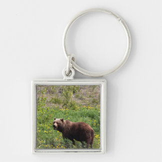 Grizzly in the Dandelions Silver-Colored Square Key Ring