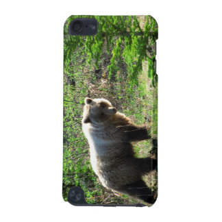 Grizzly in the Forest iPod Touch 5G Covers