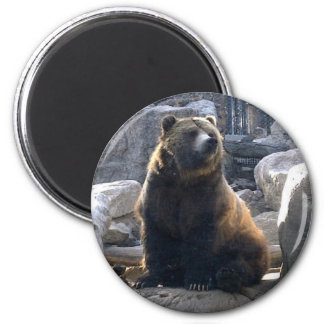 Grizzly Fridge Magnet