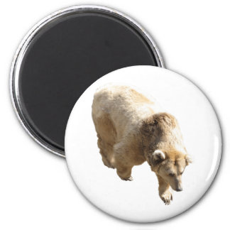 Grizzly Refrigerator Magnet