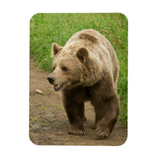 Grizzly Magnet Magnet