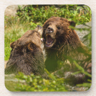 Grizzy Bears Play Fighting Beverage Coaster