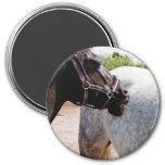 Grooming horse fridge magnets