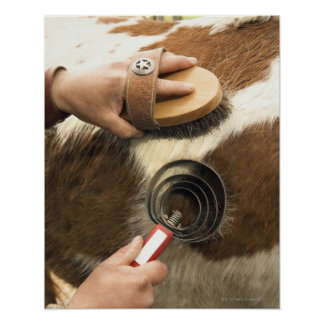 Grooming horse posters