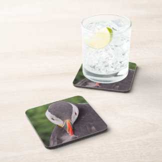 Grooming Puffin Coaster