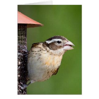 Grosbeak - Rose-breasted II Greeting Card