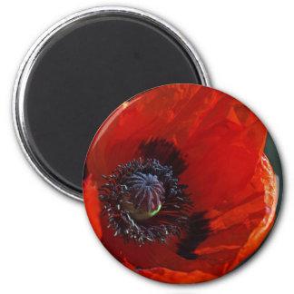 Großer Roter Mohn Magnete