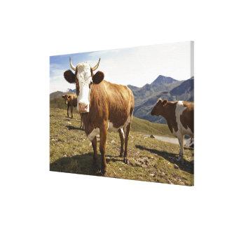 grossglockner hochalpenstrasse,hohe tauern, canvas print