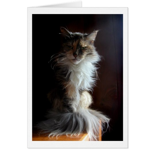 Grouchy, dignified old cat card