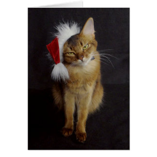 Grouchy Somali Cat in Santa Hat Christmas Card