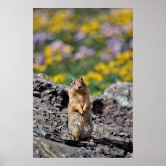 Ground Squirrel Alert for Danger Poster
