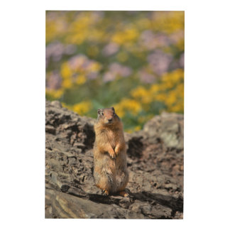 Ground Squirrel Alert for Danger Wood Wall Art