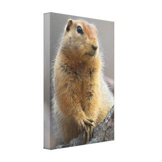 Ground Squirrel Canvas Prints