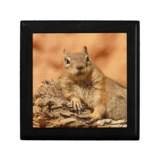 Ground Squirrel Gift Box