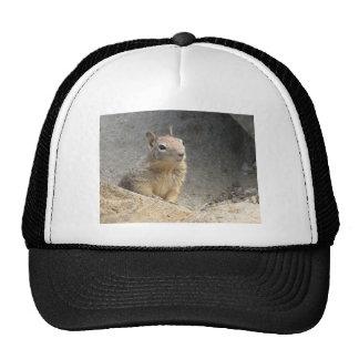 Ground Squirrel Trucker Hats