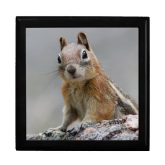 Ground Squirrel Jewelry Boxes