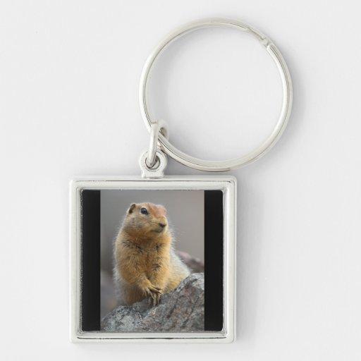 Ground Squirrel Keychains