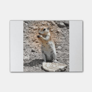 Ground Squirrel Post It Note Post-it® Notes
