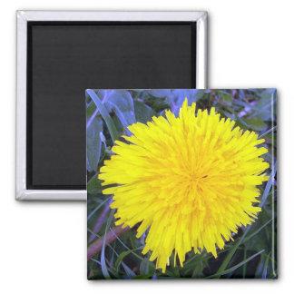Grounded Sunshine Magnet