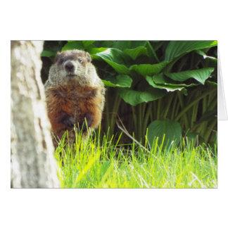 Groundhog Card