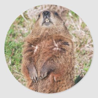 Groundhog Classic Round Sticker